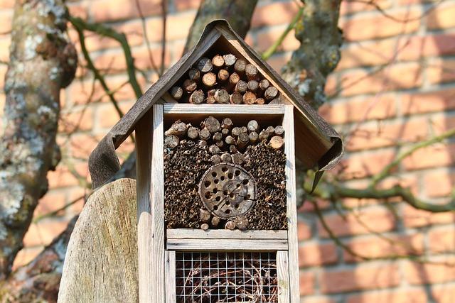 maison insecte