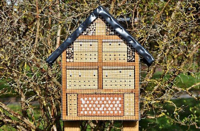hôtel insecte, maison d'insecte, boîte insecte
