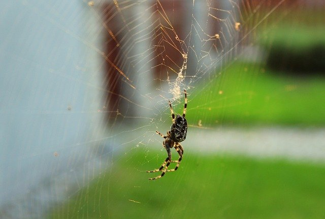 araignée, araneus, hôtel