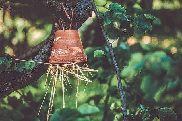 hôtel insecte, terre cuite pot de fleurs, paille