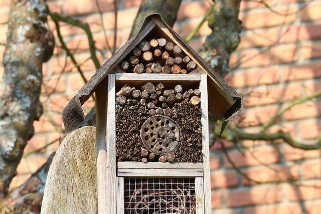 hôtel insecte, bois, abri
